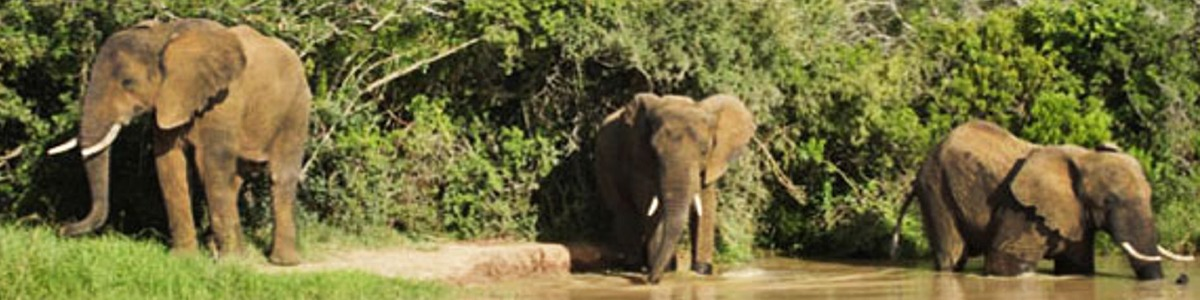 Addo Elephant Park Day Tours from Jeffreys Bay