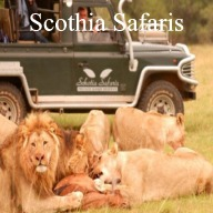 Schotia Safaris Day Tours