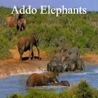 Addo Day Tours